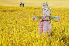 Vogelscheuche auf dem Reisfeld Stockbild