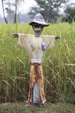 Vogelscheuche auf dem Reisgebiet Stockbild