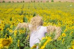 Vogelscheuche, die Sonnenblumenfelder schützt Lizenzfreie Stockfotografie