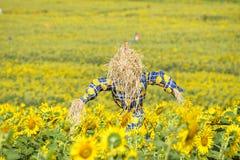 Vogelscheuche, die Sonnenblumenfelder schützt Lizenzfreie Stockbilder