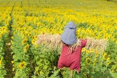 Vogelscheuche, die Sonnenblumenfelder schützt Stockbilder