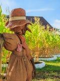 Vogelscheuche im Mais-Bauernhof Lizenzfreies Stockbild