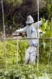 Vogelscheuche, welche die veges schützt Lizenzfreies Stockfoto