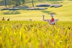 Vogelscheuchen auf dem Reisfeld Lizenzfreies Stockfoto
