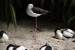 Vogelschlafen Lizenzfreie Stockbilder