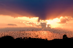 Vogelschwarm im Sonnenuntergang Lizenzfreie Stockfotos