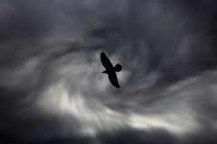 Vogelsilhouet op donkere bewolkte hemelachtergrond Royalty-vrije Stock Foto's