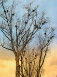 Vogelsinvasie Stock Afbeeldingen
