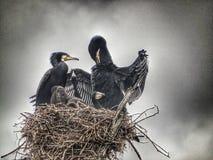 Vogelsnest bij Periyar-meer in Kerala Stock Afbeelding