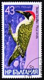 Vogelspecies van spechten, Picus-viridis, circa 1978 Royalty-vrije Stock Foto's