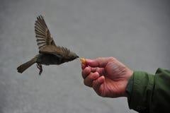 Vogelspeicherung Lizenzfreies Stockfoto