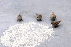 Vogelspeisen lizenzfreie stockbilder
