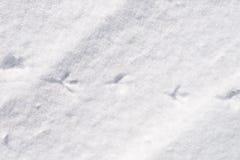 Vogelsporen in sneeuw royalty-vrije stock foto's