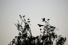 Vogelssilhouet Stock Fotografie