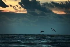 2 vogelssilhouet die door zonsondergangwolken vliegen stock foto