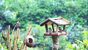 Vogelstallfütterungsplatz im Garten stock video footage