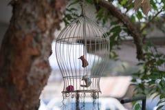 Vogelstandbeeld in een vogelkooi in de tuin royalty-vrije stock fotografie