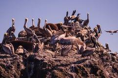 Vogelstange Lizenzfreies Stockfoto