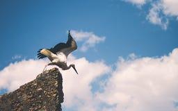 Vogelstart in aard royalty-vrije stock afbeelding
