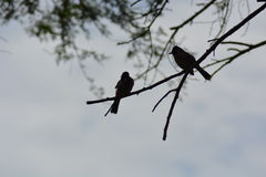 Vogelstillstehen Stockbild