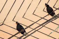 Vogelstribune onder het dak vector illustratie
