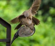Vogelstrijd stock foto's