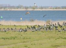 Vogelstrijd in de lucht Royalty-vrije Stock Foto's