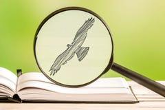 Vogelsuche mit einer Lupe Stockfoto