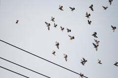 Vogelsvlieg in de donkere hemel Stock Afbeeldingen
