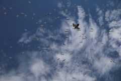 Vogelsvlieg in de hemel royalty-vrije illustratie