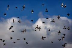 Vogeltanz Lizenzfreies Stockfoto