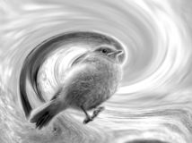 Vogeltje in werveling stock foto