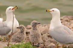 Vogeltjefamilie Royalty-vrije Stock Foto