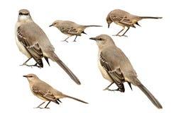 Vogeltjes Royalty-vrije Stock Afbeelding