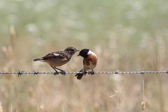 Vogelunterhaltung stockbild