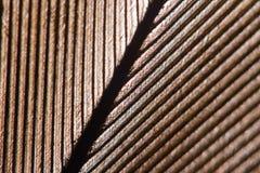Vogelveerachtergrond Macrostudioschot Royalty-vrije Stock Foto