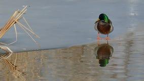 Vogelverhalten stock footage