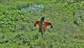 Vogelverschrikker royalty-vrije stock foto