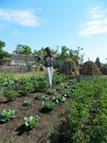 Vogelverschrikker in de tuin onder kool en tomaten wordt tentoongesteld die royalty-vrije stock afbeeldingen