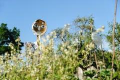 Vogelverschrikker op de tuin Stock Afbeelding