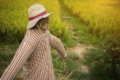 Vogelverschrikker in padieveld gemaakt om de gebieden te bewaken royalty-vrije stock afbeelding