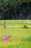 Vogelverschrikkers op padieveld Stock Afbeelding