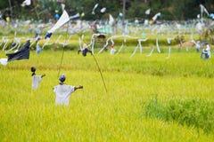 Vogelverschrikkers op padieveld stock fotografie