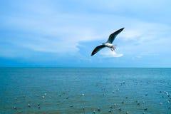 Vogelvlieg op het overzees Stock Foto