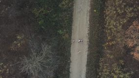Vogelvlucht boslandweg stock footage