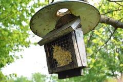 Vogelvoeder Royalty-vrije Stock Foto's