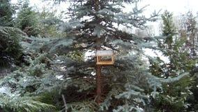 Vogelvoeder in sneeuwend de winterpark de Oekraïne stock videobeelden
