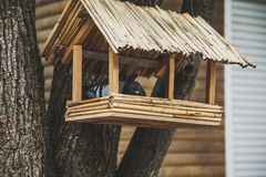 Vogelvoeder van riet op een boom stock foto's