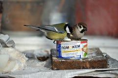 Vogelvoeders uit Oekraïense humanitaire hulp royalty-vrije stock fotografie