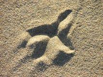Vogelvoetafdruk in het zand Stock Afbeelding